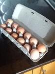 Farm fresh eggs, Portland State University PSU farmer's market